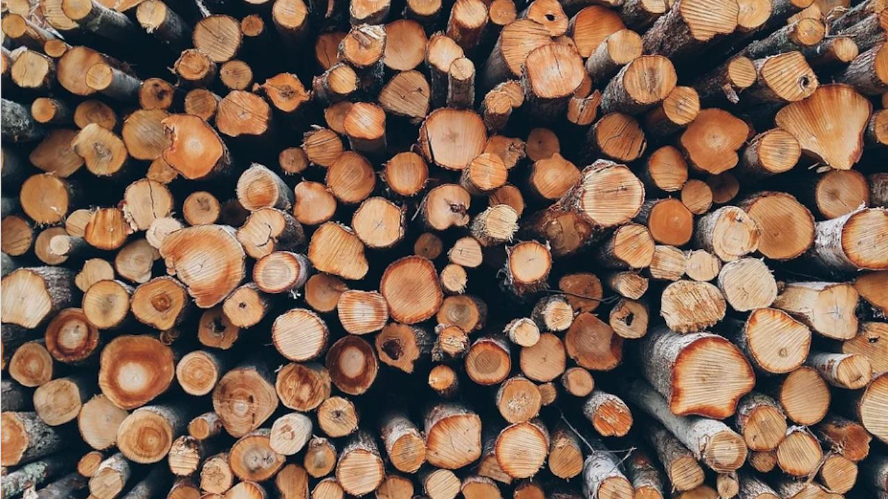 Община Болярово ще осигури 9 хил. куб. м дърва за огрев на населението