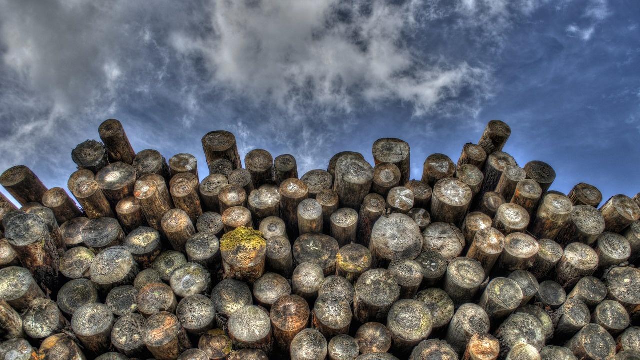 Досъдебно производство за незаконна сеч на над 150 дървета се води срещу трима мъже от Сърница