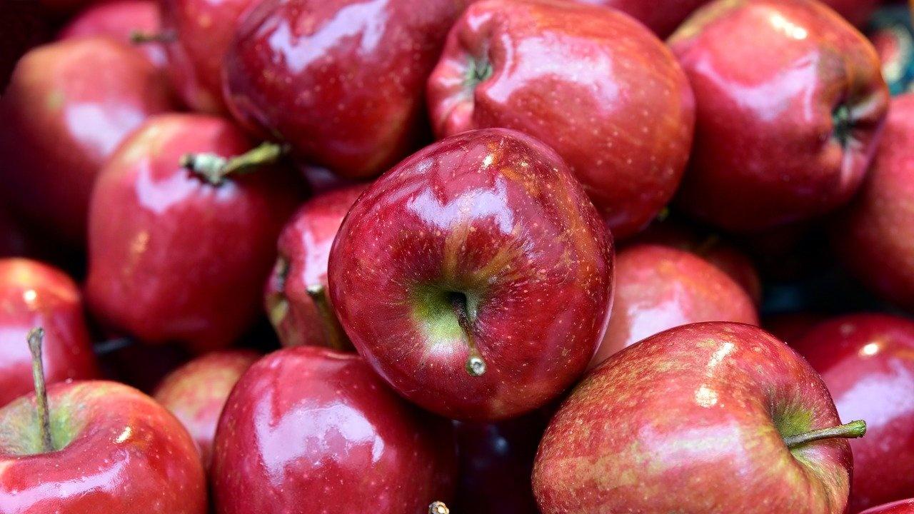 Близо тон ябълки доставят за проблемната мечка край Арда