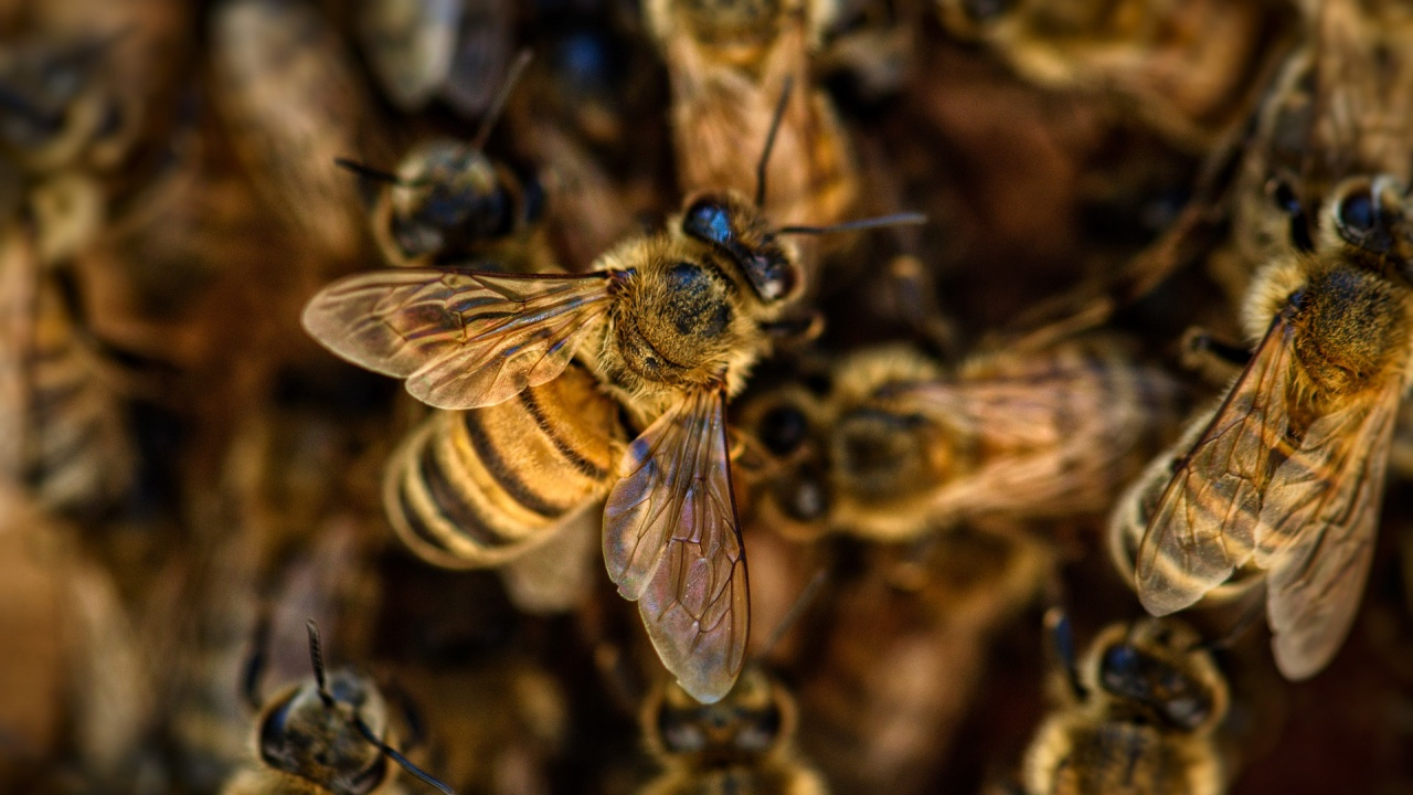 Приемат заявления за издаване на протоколи за пострадали пчелни семейства заради сушата
