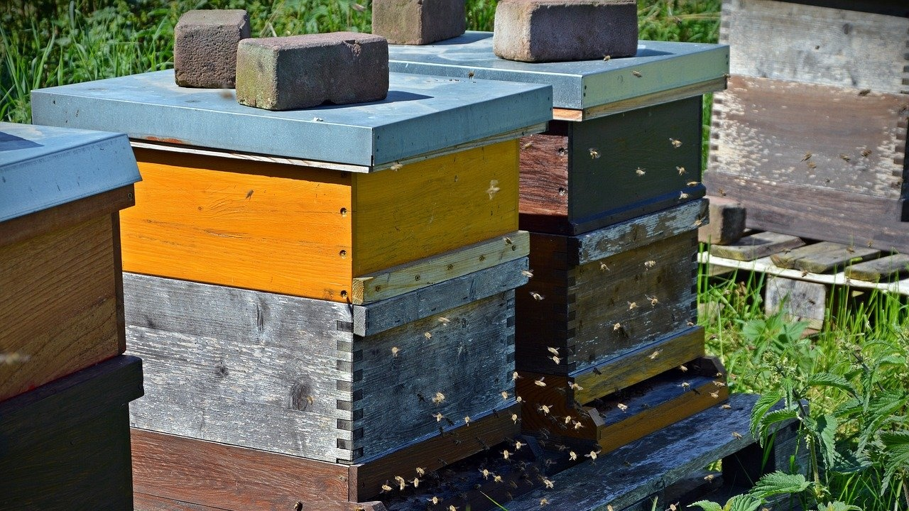 Новозагорски пожарникари са спасили 60 пчелни кошера