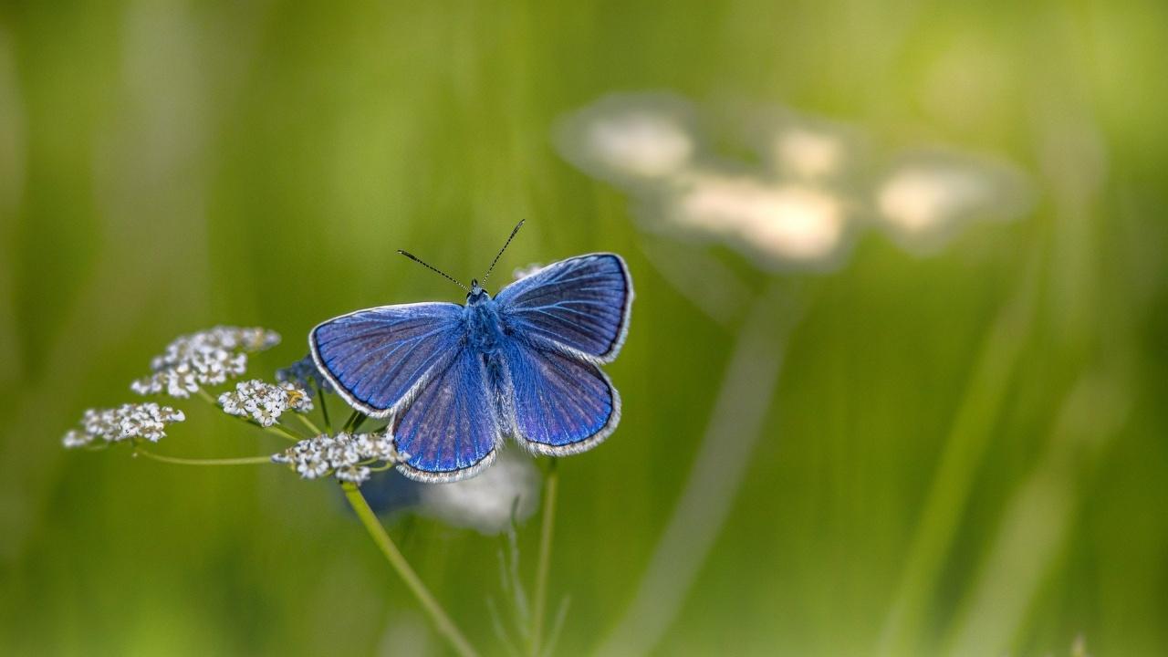 Пеперудите във Великобритания са намалели до рекордно нисък брой