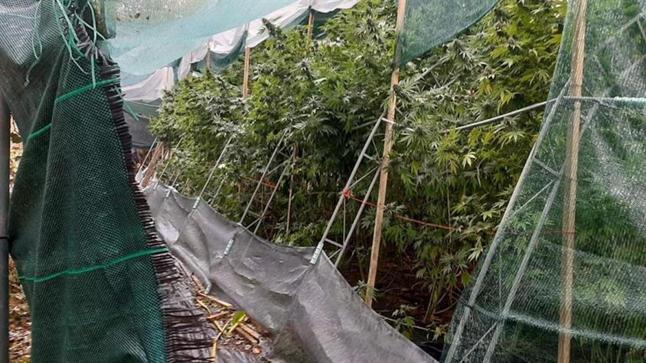 Криминалисти на ГДНП разкриха наркооранжерия в ловешко село