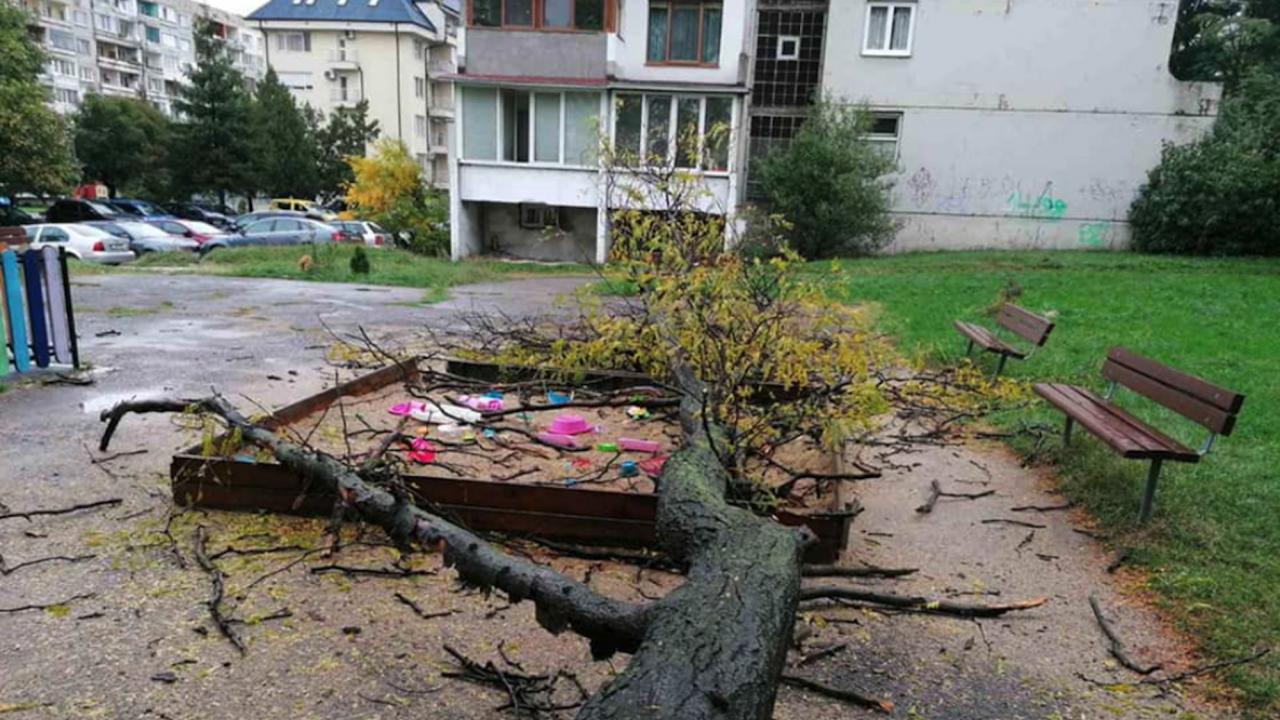 Дърво падна върху детска площадка, по чудо няма пострадали