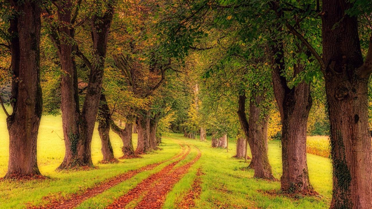 В Ямбол ще бъдат засадени 200 нови дървета тази есен