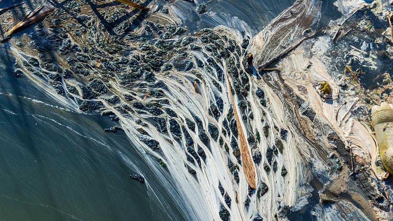 ДБ сигнализира за изпускане на отпадни води край Нова Загора