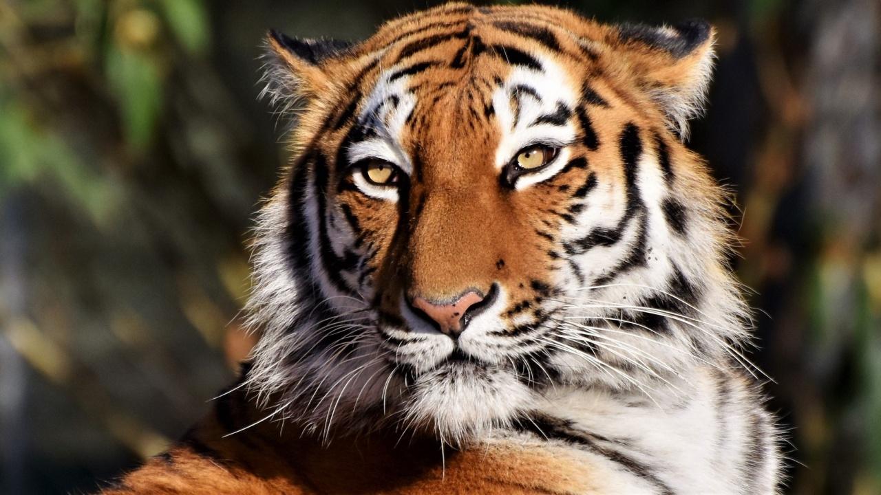 Запознайте се с един от най-новите обитатели на Зоологическа градина  в София