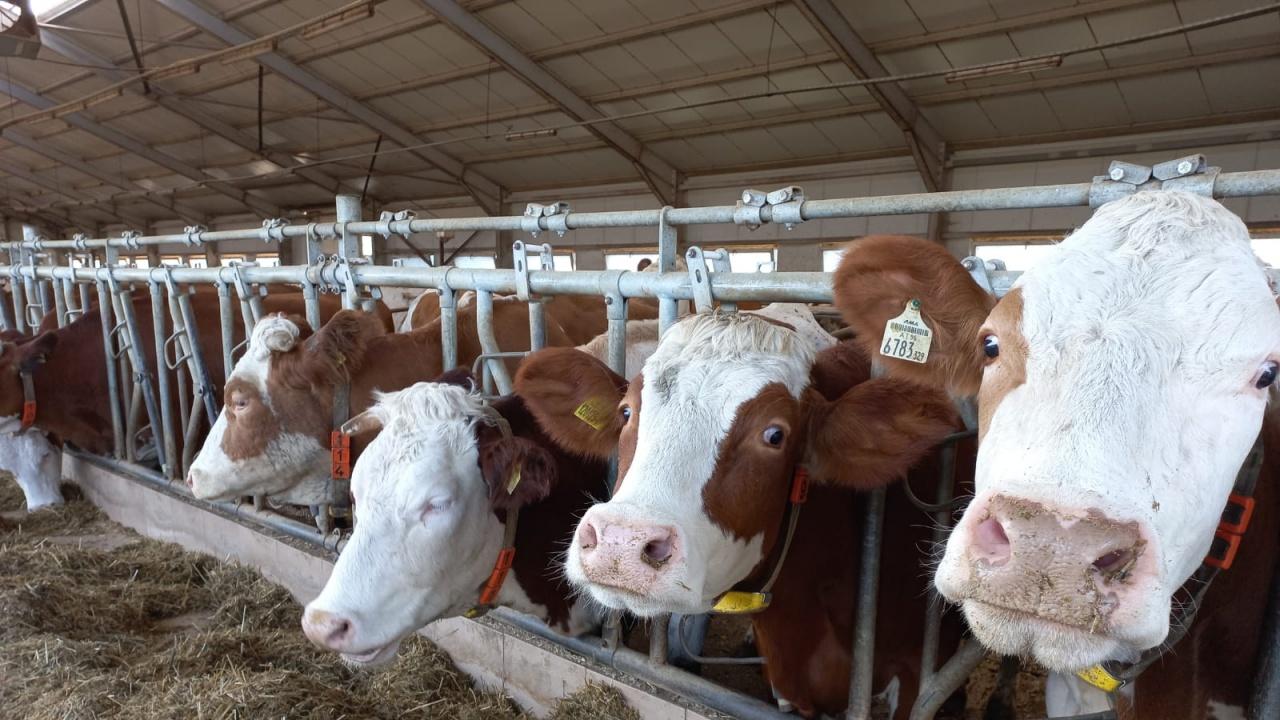 Заместник-министър Неделков: Работим за прекратяване на порочни практики в животновъдните обекти и подкрепа на добросъвестните стопани
