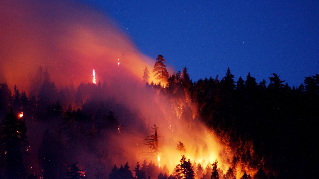 Сирия екзекутира 24 човека заради смъртоносни горски пожари миналата година