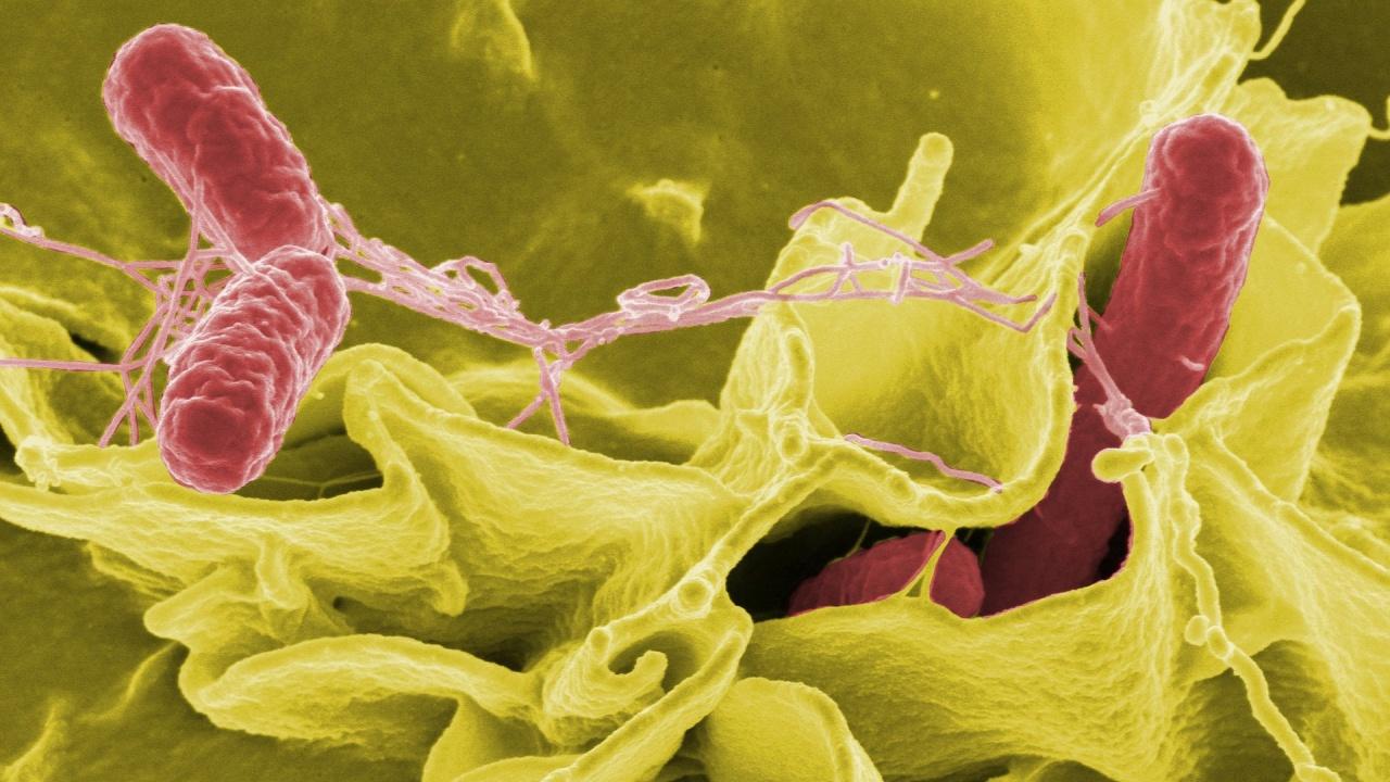 Епидемия от салмонела в САЩ