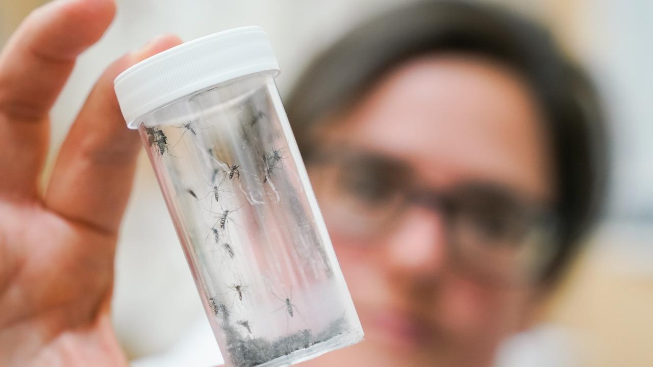 Опасни комари нападнаха Италия