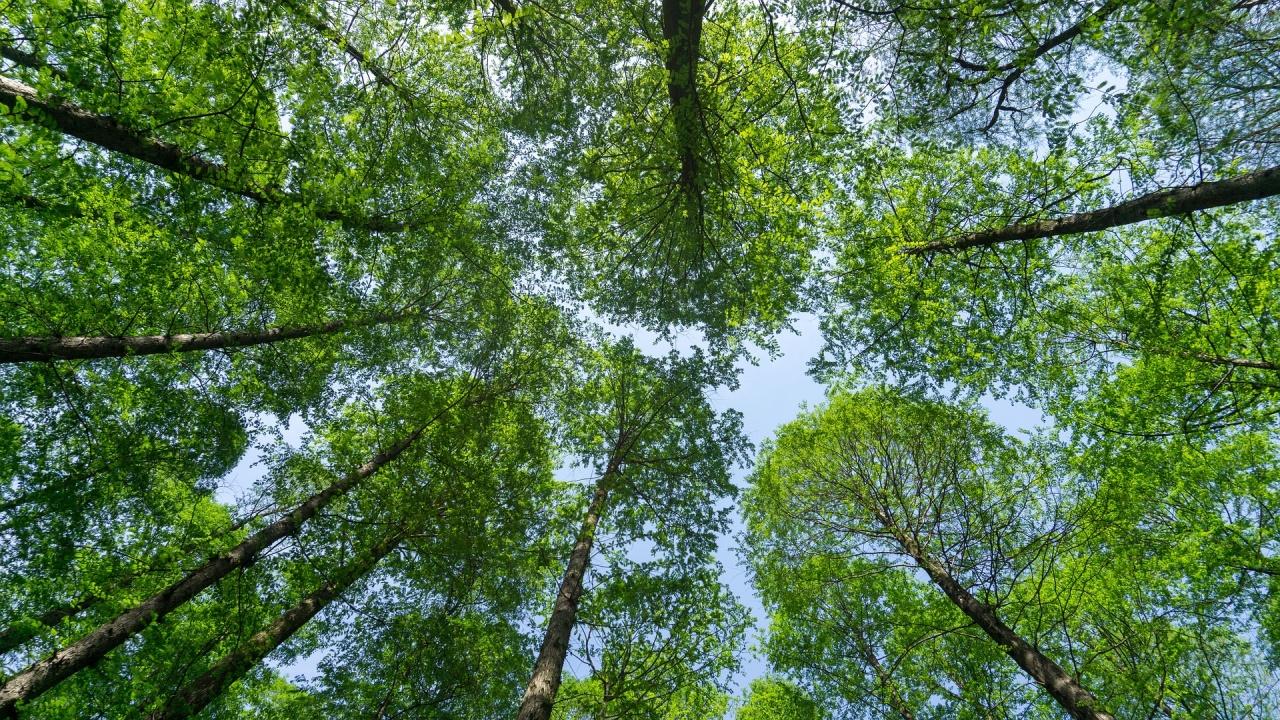Земетресенията стимулират растежа на дърветата