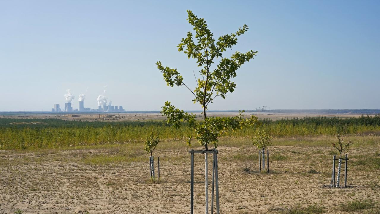 Над четири хиляди ще са засадените дървета в София през тази година