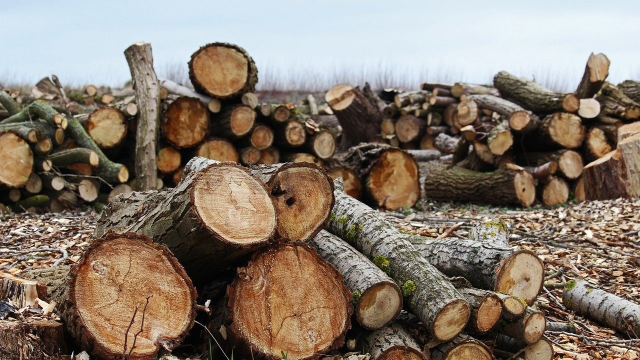 Незаконна сеч на 50 кубика дърва разследват полицаи от Павликени