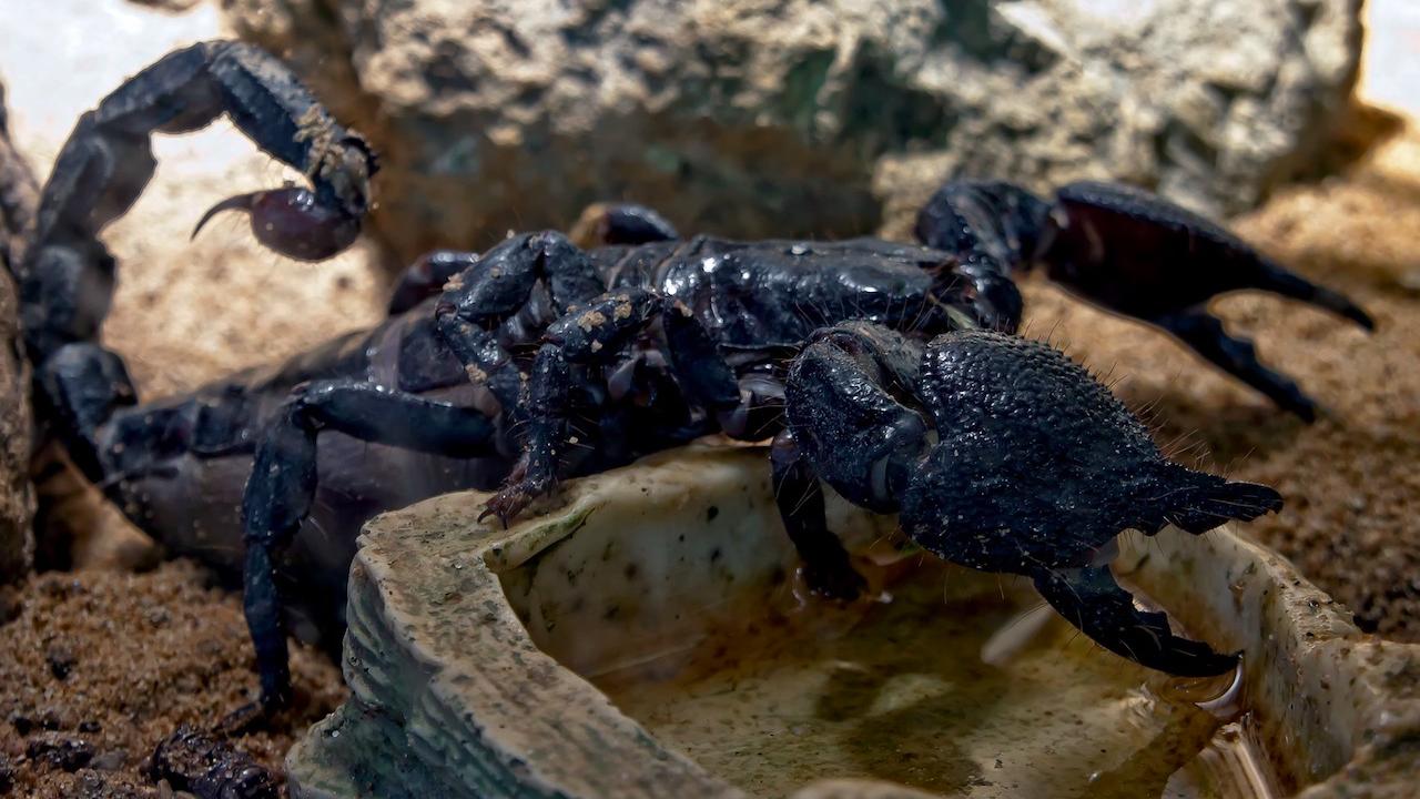Учени изследват потенциала на отровата от скорпион за лечение на COVID-19