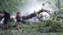 Бурята взе жертва в Борисовата градина