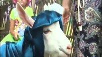 Конкурс за най-красива коза в Литва