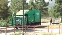 Мечка-стопаджийка се вози на боклукчийски камион