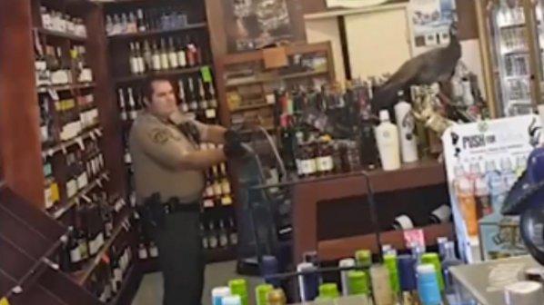 Паун съсипа пиячка за $ 500