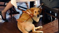Куче обра овациите на концерт в Турция