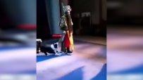 Китайско оперно куче стана хит в нета