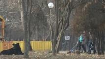 Глутници кучета нахапаха учителка в парк в Благоевград