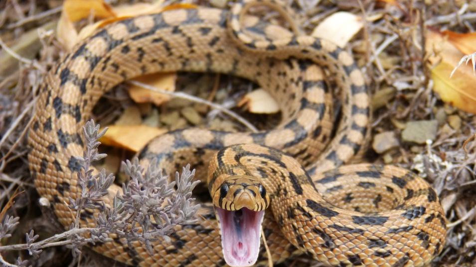 Змия разбуни сърби